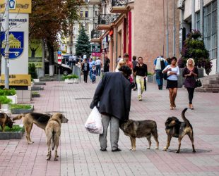 Stray dogs and a beggar on a street in Kiev, Ukraine