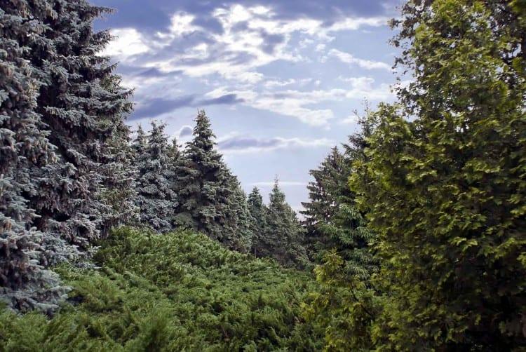 Trees in the National Botanical Garden in Kiev
